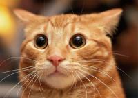 A macskák szigete, az állatbarátok paradicsoma