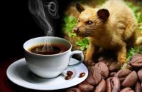 Fogyasszon el egy csésze luxus kávét Bali szigetén