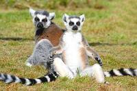 Madagaszkár az érdekességek szigete