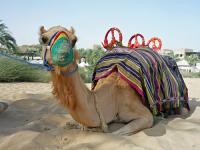 Luxus és kényeztetés a sivatag közepén