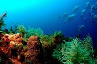 Korallzátonyt találtak az Amazonas folyó csendes-óceáni torkolatánál